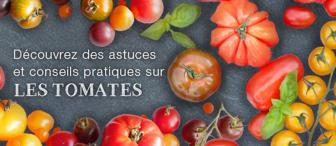 La tomate sous toutes ses formes ! Blog Tomates