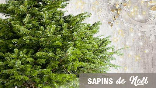 acces boutique sapins Livraison de sapins de Noël à domicile !