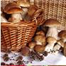 Comment choisir les champignons ?