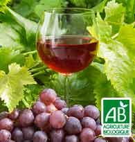 Tout savoir sur le vin Vins Bio