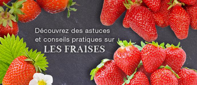 La fraise: que cache le fruit préféré des Français ? Blog fraise