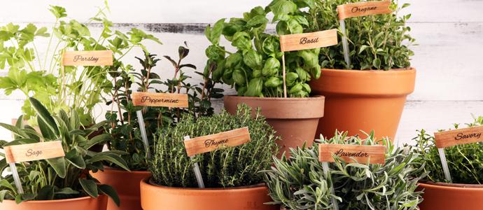 Les herbes aromatiques en cuisine ED Blog HerbesAromatiques